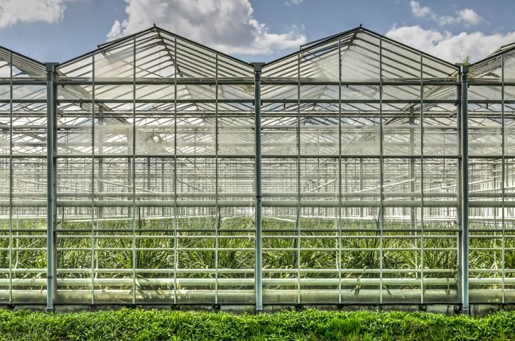 2. The Greenhouse