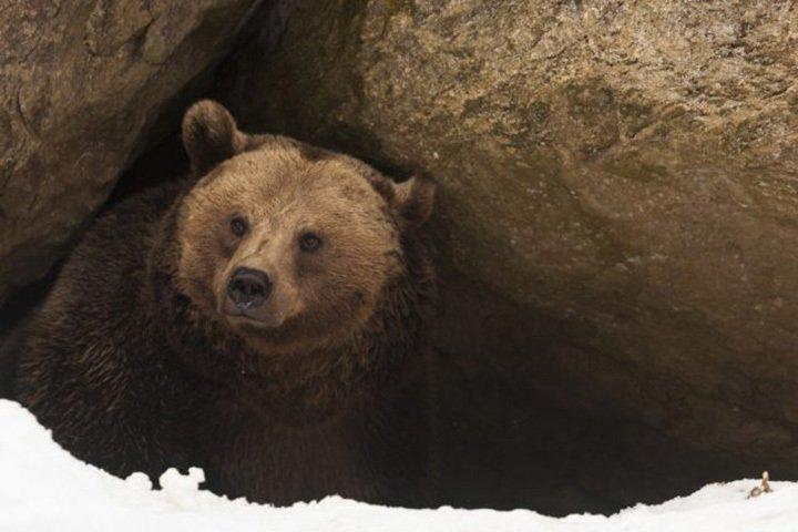 6. The Hibernating Bear