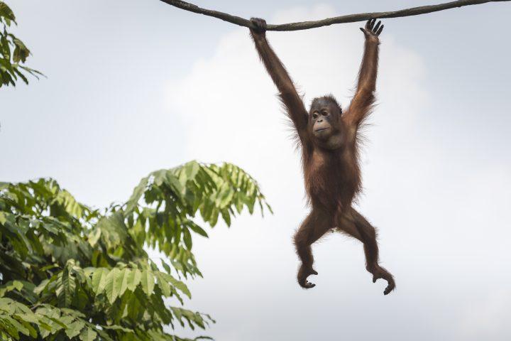 1. Monkey Ecosystem
