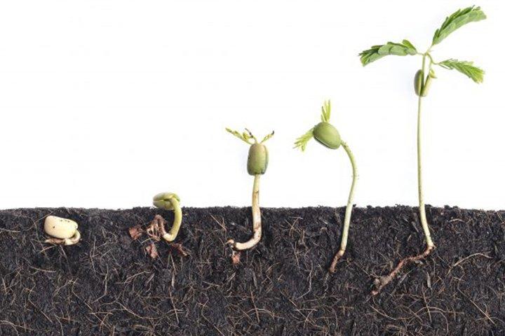 4. Plant Growth